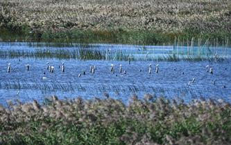 南遷候鳥陸續飛抵莫莫格濕地