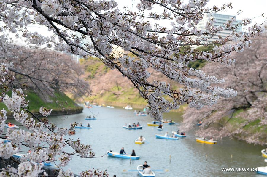 JAPAN-TOKYO-CHERRY BLOSSOM