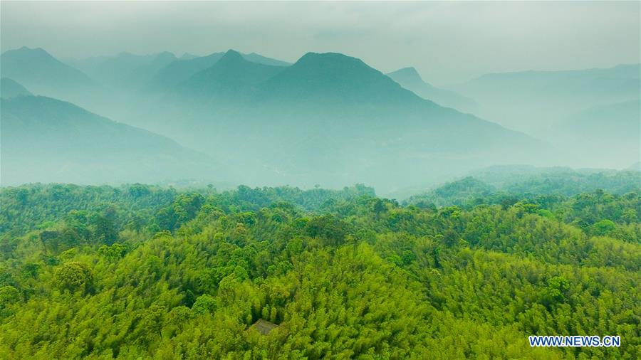 Aerial photo taken on May 10, 2017 shows the Chishui Bamboo Forest Park in southwest China's Guizhou Province. (Xinhua/Ou Dongqu)<br/>