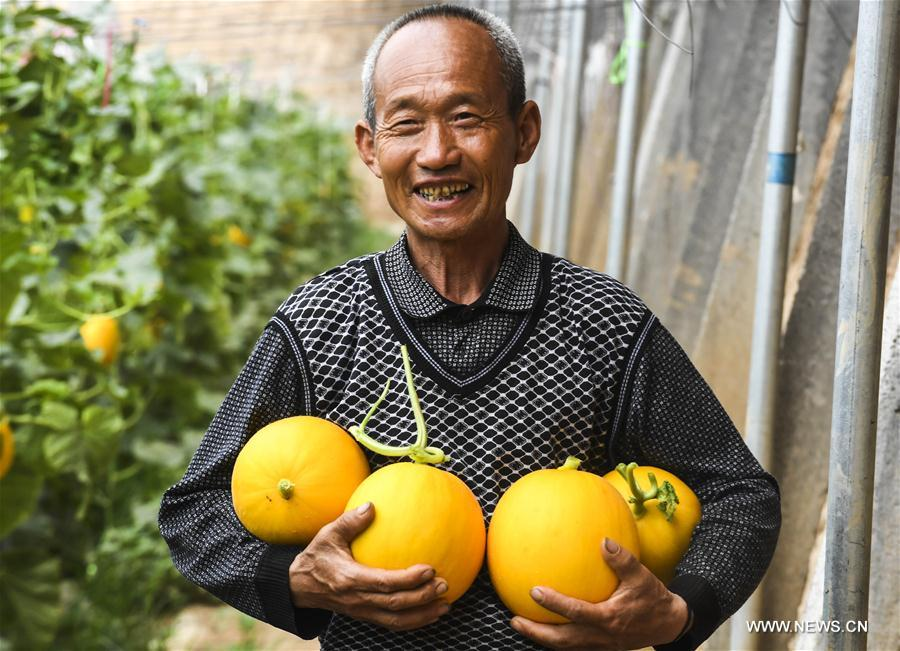 A villager shows his muskmelons at a greenhouse in Tanglin Village in Zaoqiang County, north China's Hebei Province, May 11, 2017. (Xinhua/Li Xiaoguo)<br/>