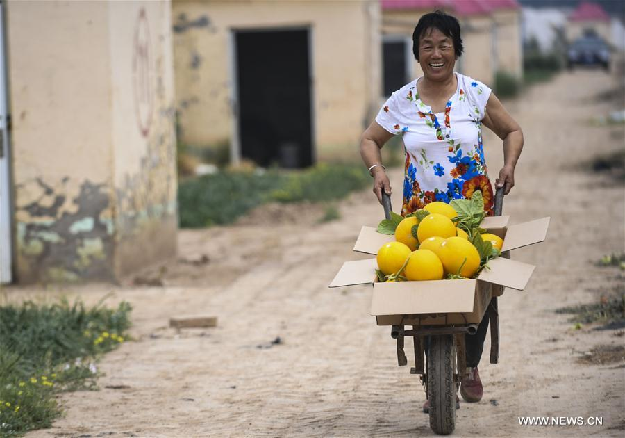 A villager carries muskmelons in Tanglin Village in Zaoqiang County, north China's Hebei Province, May 11, 2017. (Xinhua/Li Xiaoguo)