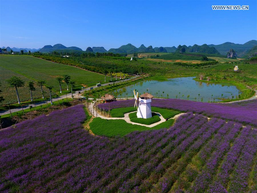 Pleasing Scenery Of Lavender Garden In Xincheng S China  Xinhua  English  With Licious Scenery Of Lavender Garden In Xincheng S China With Beauteous Garden Wall Screening Ideas Also Parks And Gardens In Addition Log Cabins For Your Garden And Garden Boulders For Sale As Well As Led Garden Light Additionally Joseph Bentley Garden Tools From Newsxinhuanetcom With   Licious Scenery Of Lavender Garden In Xincheng S China  Xinhua  English  With Beauteous Scenery Of Lavender Garden In Xincheng S China And Pleasing Garden Wall Screening Ideas Also Parks And Gardens In Addition Log Cabins For Your Garden From Newsxinhuanetcom