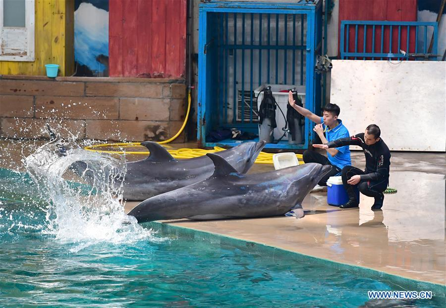 Dolphins performs under the instruction of trainers at Qujiang Polar Ocean Park in Xi'an, capital of northwest China's Shaanxi Province, Aug. 2, 2017. (Xinhua/Shao Rui)<br/>