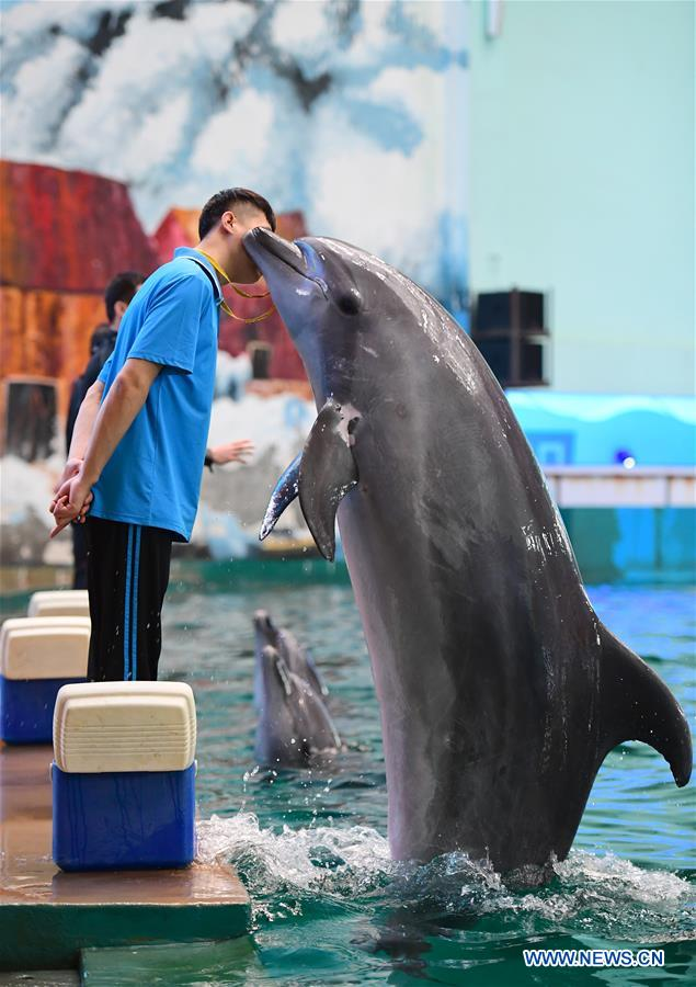 A dolphin performs under the instruction of a trainer at Qujiang Polar Ocean Park in Xi'an, capital of northwest China's Shaanxi Province, Aug. 2, 2017. (Xinhua/Shao Rui)
