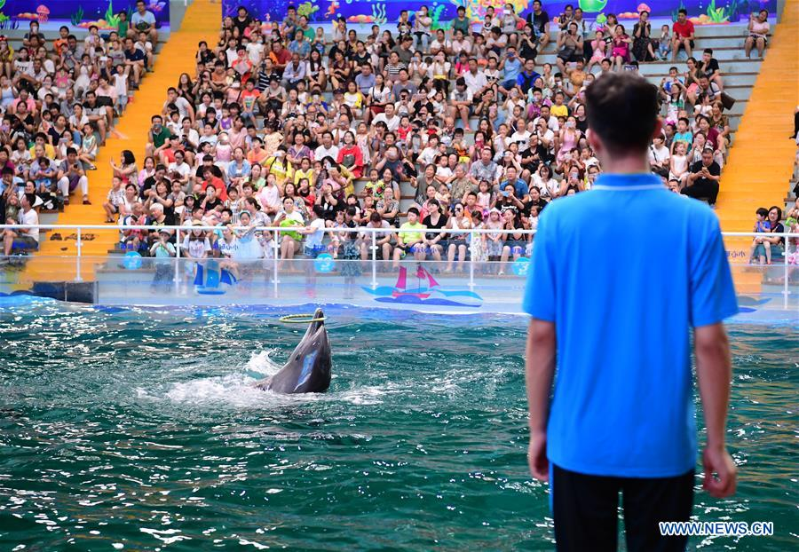 A dolphin performs under the instruction of a trainer at Qujiang Polar Ocean Park in Xi'an, capital of northwest China's Shaanxi Province, Aug. 2, 2017. (Xinhua/Shao Rui)<br/>