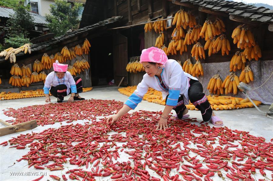 #CHINA-GUANGXI-LONGSHENG-HARVEST (CN)