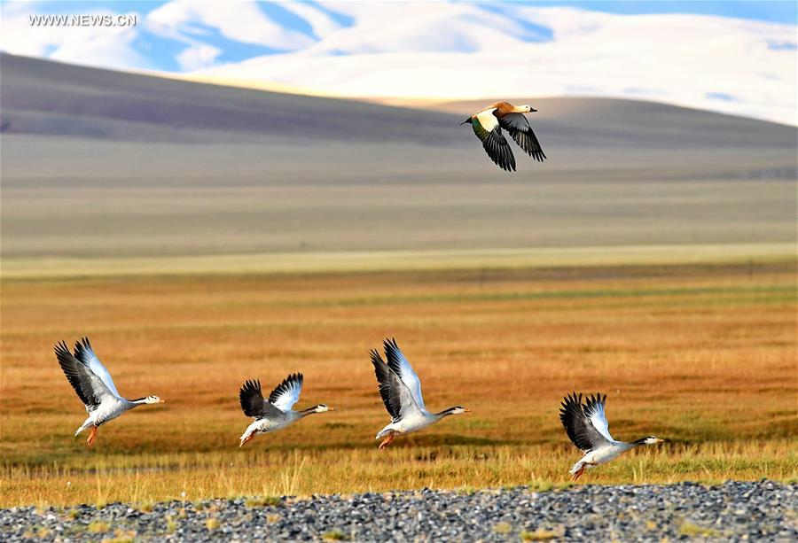 Wildlife paradise: Changtang National Nature Reserve in China's Tibet