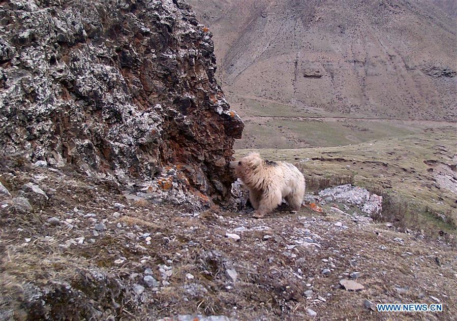 CHINA-QINGHAI-QILIANSHAN-WILD ANIMAL (CN)