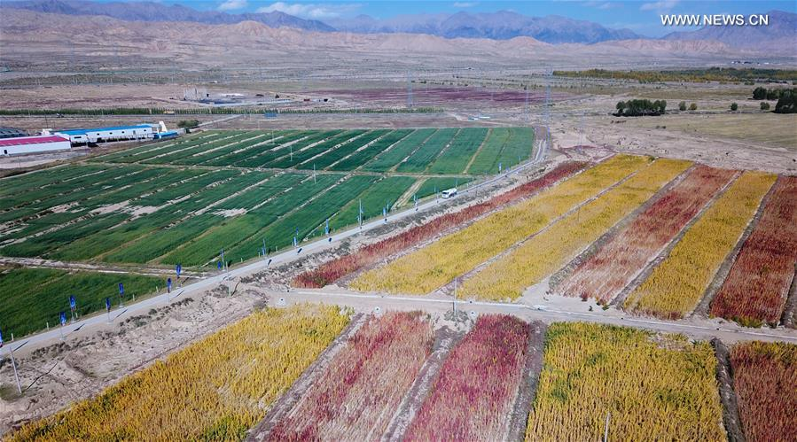 Aerial photo taken on Sept. 27, 2017 shows quinoa fields at Wulan County in northwest China's Qinghai Province. Qinghai become more beautiful with the coming of autumn this year. (Xinhua/Wu Gang)<br/>