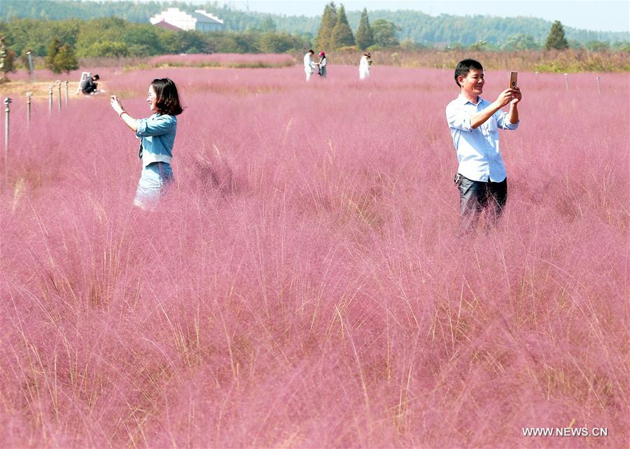 Tourists take photos at a field in Anji County, east China's Zhejiang Province, Oct. 9, 2017. (Xinhua/Xia Pengfei)<br/>