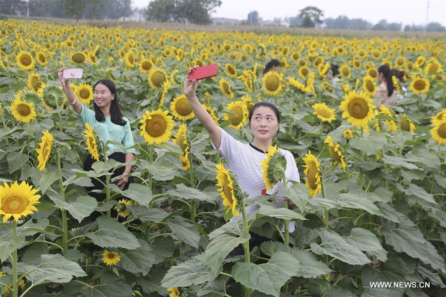Tourists take selfies among sunflowers in Guanyun County, east China's Jiangsu Province, Oct. 9, 2017. (Xinhua/Wu Chenguang)
