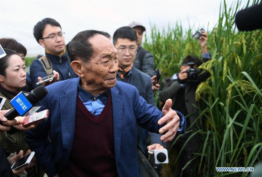 CHINA-HUNAN-'GIANT' RICE (CN)