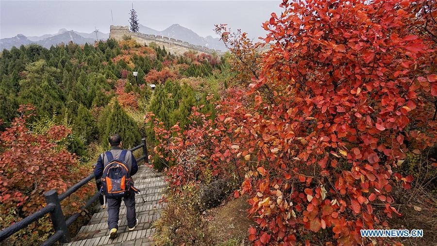 CHINA-BEIJING-TOURISM-AUTUMN (CN)