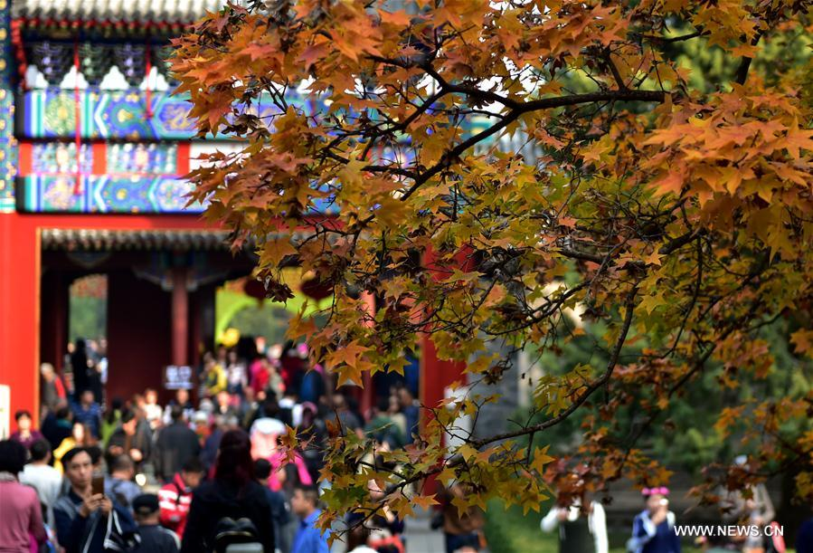 CHINA-BEIJING-AUTUMN-FRAGRANT HILLS PARK (CN)