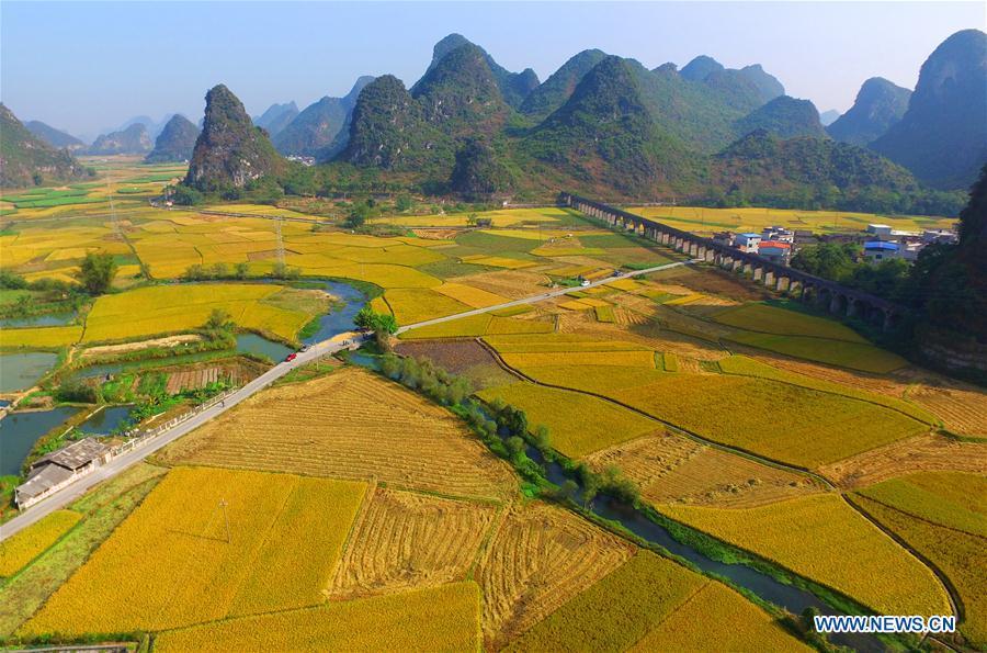 #CHINA-GUANGXI-LIUZHOU-RICE-HARVEST (CN)