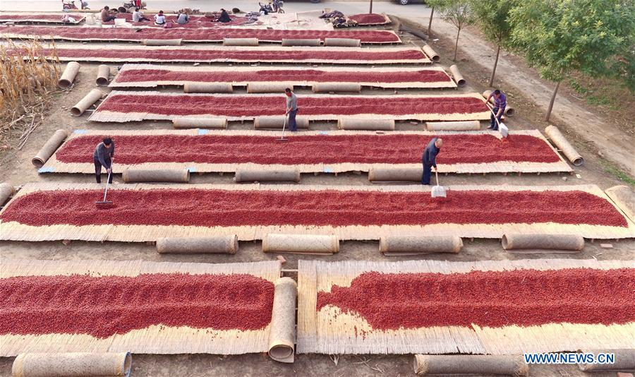 CHINA-HEBEI-RED DATES(CN)