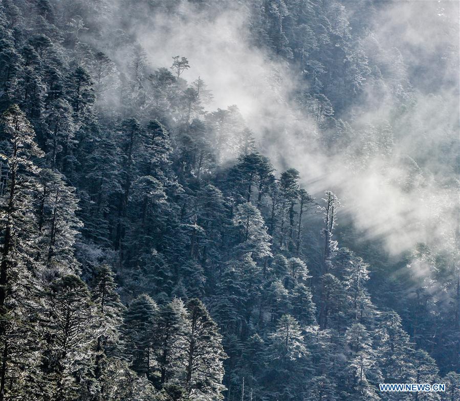 CHINA-TIBET-YUMAI-SCENERY (CN)
