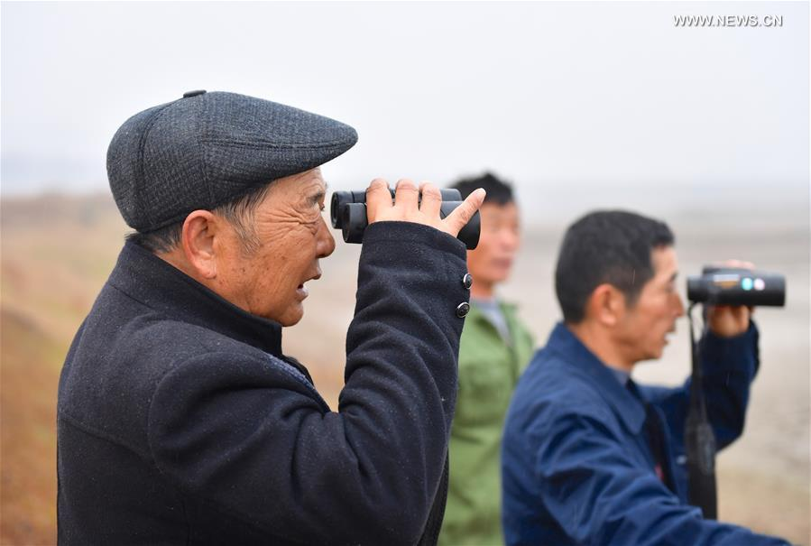 Li Chunru (L) and other volunteers observe birds in Poyang Lake nature reserve, east China's Jiangxi Province, Nov. 28, 2017. Poyang is a seasonal destination for over a million birds every year. Doctor Li Chunru has been voluntarily taken care of migratory birds at Poyang Lake nature reserve for more than 30 years, bringing over 50,000 wounded wild birds out of danger.(Xinhua/Hu Chenhuan)<br/>