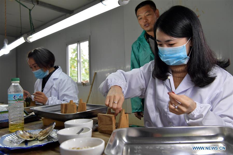 CHINA-JIANGXI-WANNIAN-PEARL INDUSTRY (CN)