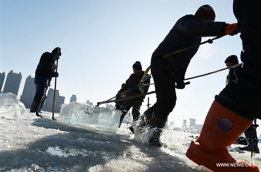 CHINA-HEILONGJIANG-HARBIN-ICE COLLECTING (CN)