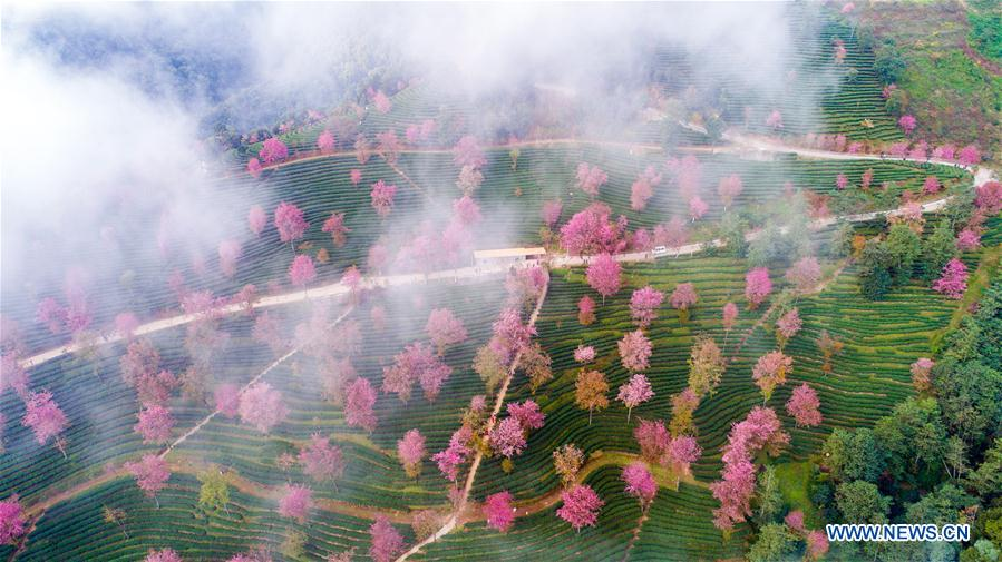 Cherry valley seen in SW China