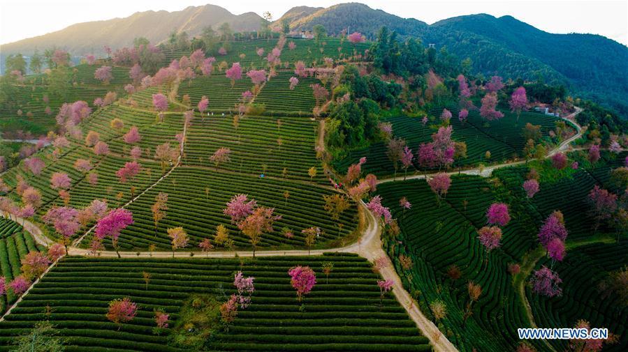 CHINA-YUNNAN-CHERRY VALLEY-SCENERY (CN)