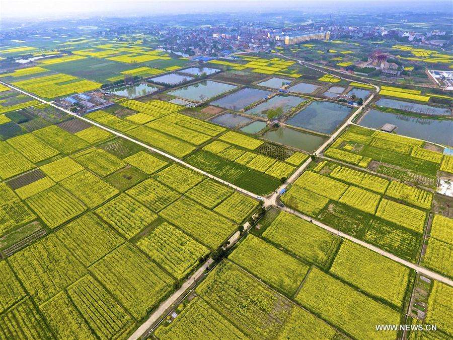 Aerial photo taken on March 18, 2017 shows cole blossoms in the fields in Fengshan Town of Xiaochang County, central China's Hubei Province. (Xinhua/Du Huaju)<br/>