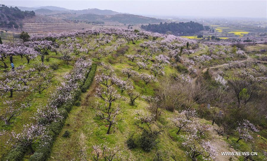 Aerial photo taken on March 18, 2017 shows a peach garden in Zhuhe Village of Xiaochang County, central China's Hubei Province. (Xinhua/Du Huaju)<br/>