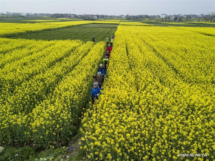 Tourists view cole blossoms in the fields in Fengshan Town of Xiaochang County, central China's Hubei Province, March 18, 2017. (Xinhua/Du Huaju)
