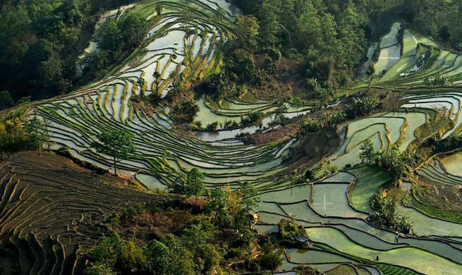 Scenery of Hani terraced fields in SW China's Yunnan