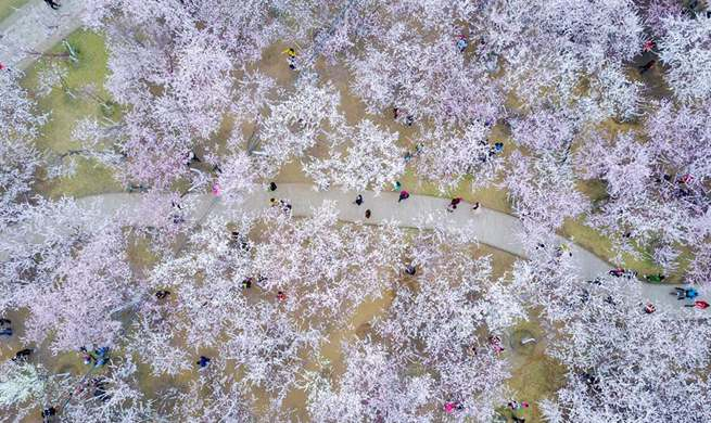 Peach blossoms attract local residents in N China's Hohhot