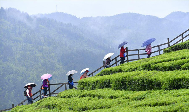 Tourists visit tea garden in central China's Hubei