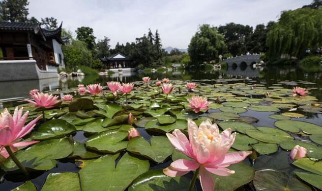 Scenery of Chinese garden Liu Fang Yuan in Los Angeles