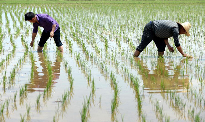 Farmers work in farmlands at beginning of summer around China