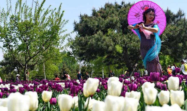 Tourists view tulip flowers in northeast China
