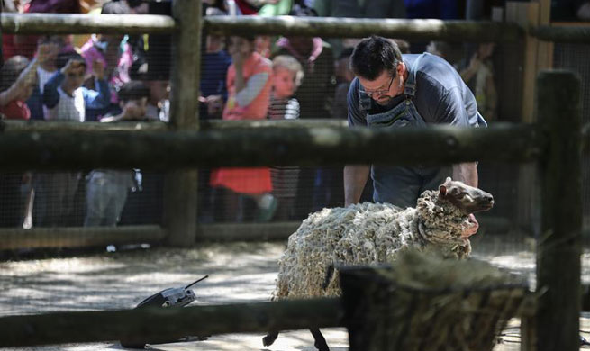23rd Annual Fleece Festival marked in New York