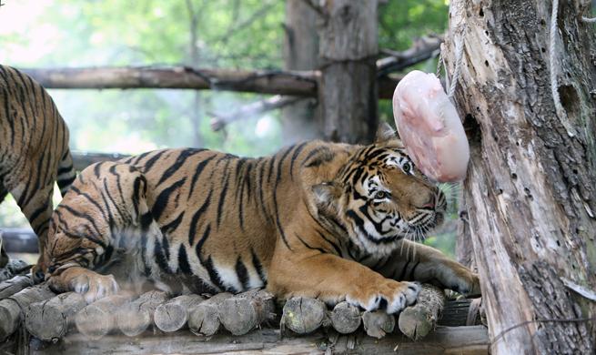 In pics: animals at Everland resort amid summer heat