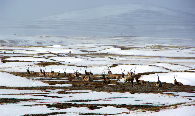 China's Qinghai Hoh Xil enters world heritage list as natural site