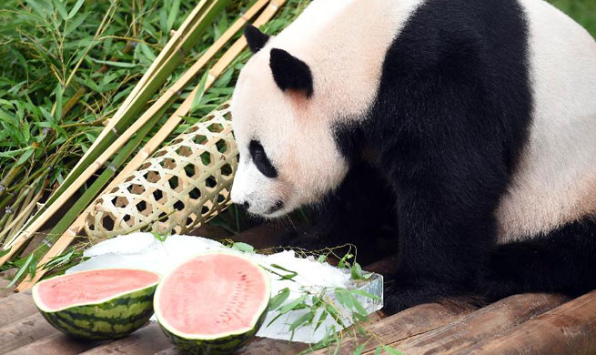 Birthday for one of China-leased giant panda pair celebrated in S.Korea