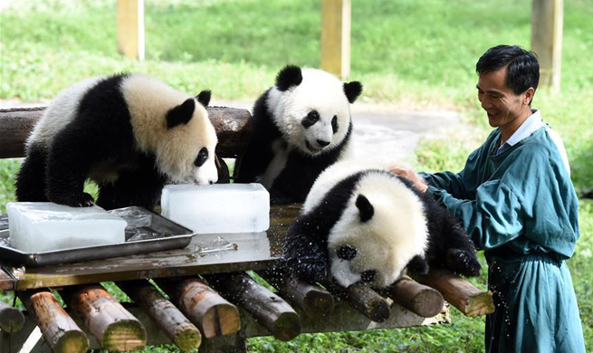 China's zoos take measures to cool down animals in hot weather