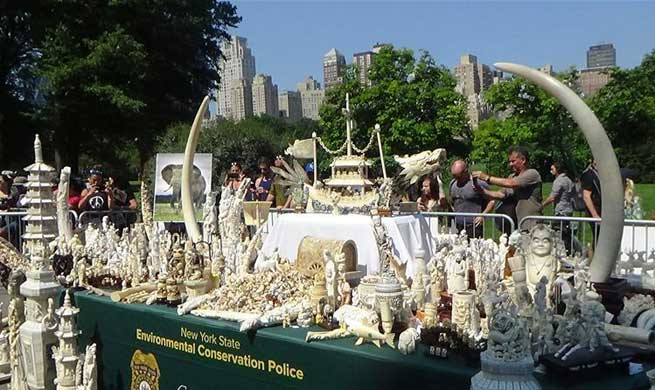 New York crushes nearly 2 tons of ivory artifacts to deter illegal trade