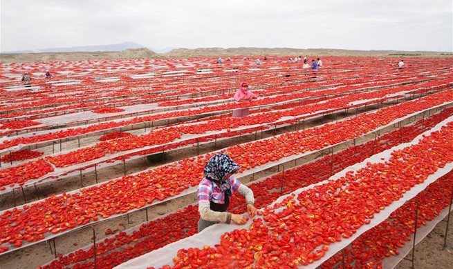Workers dry tomatoes in NW China's Xinjiang