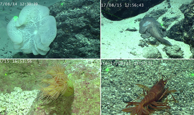 China's Discovery ROV collects samples from Caroline Seamount