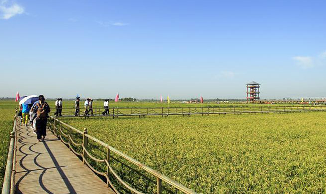 NE China county introduces environment friendly planting system