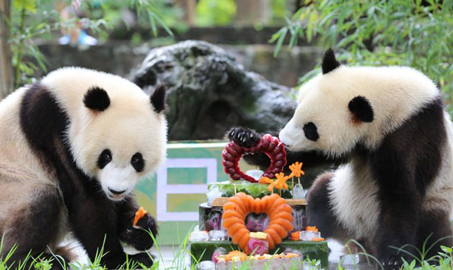 Giant panda twins celebrate 2nd birthday