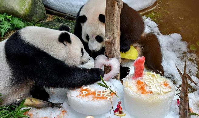 Malaysia celebrates birthday of giant pandas