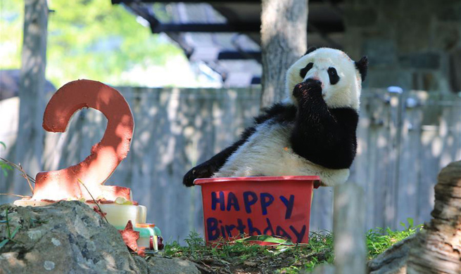 U.S.-born giant panda Bei Bei turns two, delights zoo visitors