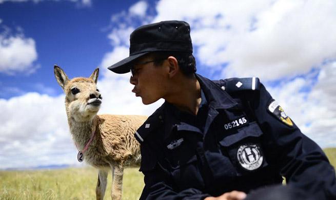 Hol Xil: Ideal habitat for Tibetan animals