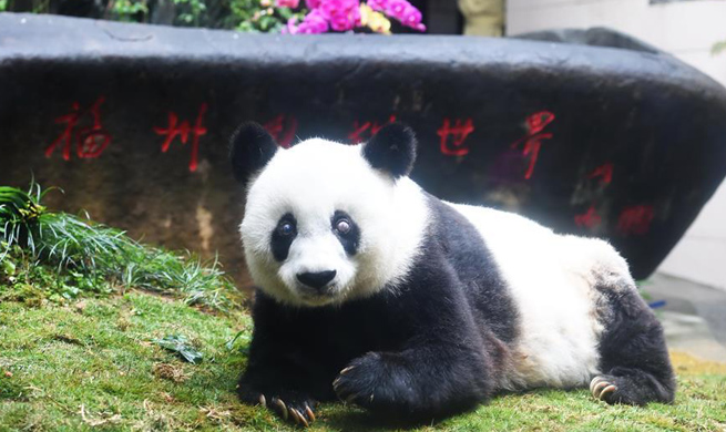 China Focus: World's oldest panda dies aged 37