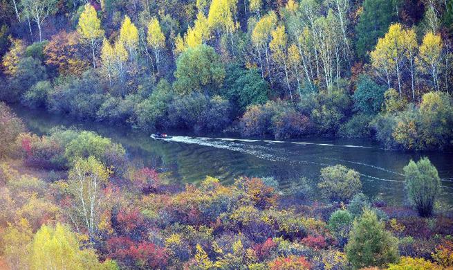 Autumn scenery of Huma County in NE China's Heilongjiang